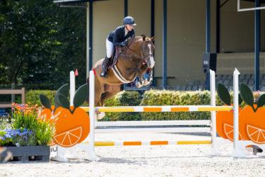 Springpaard in de etalage: King HBC
