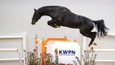 Prestaties van eerder verkochte HBC springpaarden: