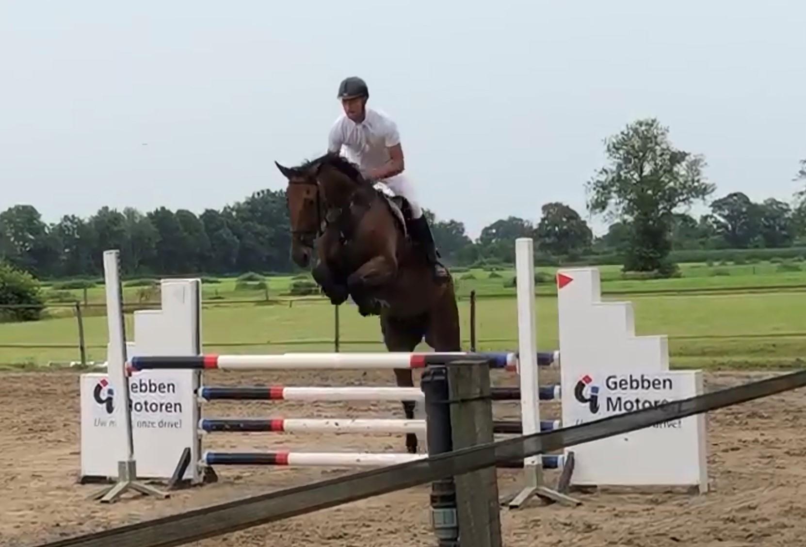 Prestaties jonge paarden in de sport: